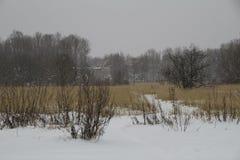Campo di erba asciutta del campo del paesaggio di inverno del gelo snowfall La Russia Immagine Stock Libera da Diritti