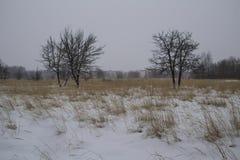 Campo di erba asciutta del campo del paesaggio di inverno del gelo snowfall La Russia Fotografia Stock Libera da Diritti