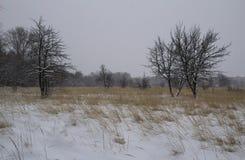 Campo di erba asciutta del campo del paesaggio di inverno del gelo snowfall La Russia Fotografie Stock Libere da Diritti