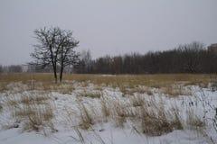 Campo di erba asciutta del campo del paesaggio di inverno del gelo snowfall La Russia Fotografia Stock