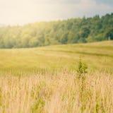 Campo di erba asciutta della campagna Immagine Stock