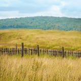 Campo di erba asciutta della campagna Immagine Stock Libera da Diritti
