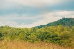 Campo di erba asciutta della campagna Fotografie Stock Libere da Diritti