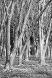 Campo di erba asciutta e della foresta arida Fotografia Stock