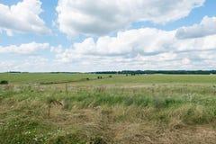 Campo di erba con cielo blu Immagini Stock