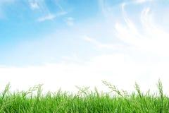 Campo di erba con cielo blu Fotografia Stock