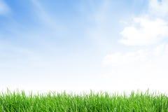 Campo di erba con cielo blu Immagini Stock Libere da Diritti