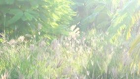 Campo di erba con il chiarore 4k 25fps della luce morbida e del vento forte video d archivio