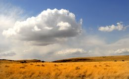 Campo di erba d'ondeggiamento sotto un cielo drammatico Fotografia Stock Libera da Diritti