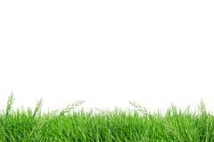 Campo di erba dell'isolato Fotografia Stock Libera da Diritti