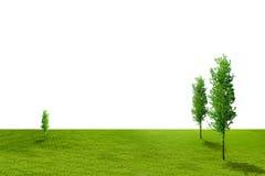 Campo di erba dell'isolato Immagini Stock Libere da Diritti