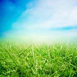 Campo di erba di estate Fotografia Stock Libera da Diritti