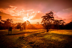 Campo di erba drammatico di tramonto di colori Immagini Stock Libere da Diritti