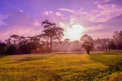 Campo di erba drammatico di tramonto di colori Immagine Stock Libera da Diritti
