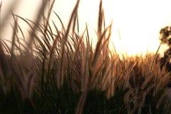 Campo di erba durante la luce solare, tramonto, aumento dell'insieme Immagine Stock