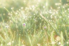 Campo di erba di estate con i fiori, concetto astratto del fondo, fuoco molle, bokeh, toni caldi Fotografie Stock