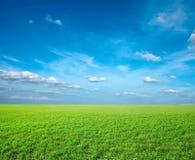 Campo di erba fresca verde Fotografia Stock