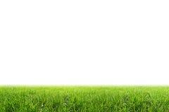 Campo di erba isolato Fotografia Stock Libera da Diritti
