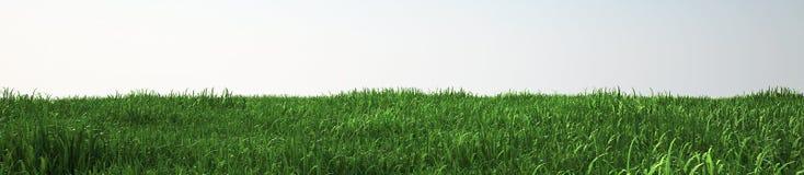 Campo di erba molle, vista di prospettiva con il primo piano Immagini Stock