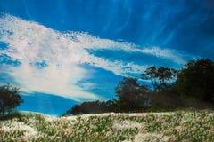Campo di erba sotto il cielo blu Fotografia Stock Libera da Diritti