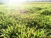 Campo di erba sull'ultimo piano della costruzione verde nella mattina Immagine Stock Libera da Diritti