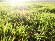 Campo di erba sull'ultimo piano della costruzione verde nella mattina Fotografia Stock