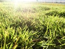 Campo di erba sull'ultimo piano della costruzione verde nella mattina Fotografia Stock Libera da Diritti