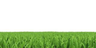 Campo di erba verde Fotografia Stock