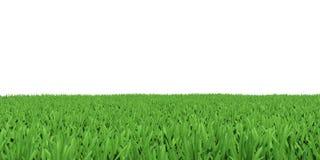 Campo di erba verde Fotografie Stock