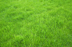 Campo di erba verde Fotografie Stock Libere da Diritti