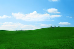 Campo di erba verde Immagini Stock Libere da Diritti