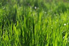 Campo di erba verde adatto ad ambiti di provenienza o a carte da parati Fotografia Stock Libera da Diritti
