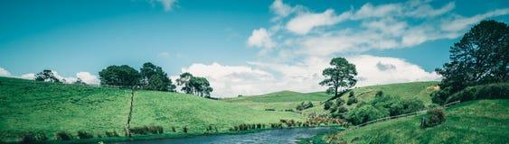 Campo di erba verde in campagna nel tono d'annata Immagini Stock
