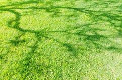 Campo di erba verde con ombra del fondo della natura dell'albero Immagini Stock