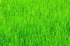 Campo di erba verde della natura con l'ombra di Sun Immagine Stock Libera da Diritti