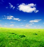 Campo di erba verde e del cielo nuvoloso blu Fotografie Stock