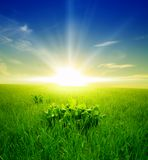 Campo di erba verde e del cielo nuvoloso blu Immagini Stock Libere da Diritti