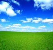 Campo di erba verde e di cielo blu Fotografia Stock