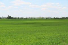 campo di erba verde fresco Immagine Stock Libera da Diritti