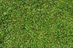 Campo di erba verde naturale Immagini Stock Libere da Diritti