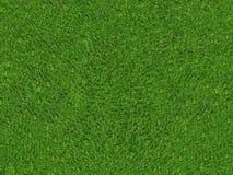 Campo di erba verde naturale Immagini Stock