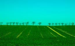Campo di erba verde sulle piccoli colline e cielo blu Fotografia Stock