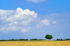 Campo di estate Fotografia Stock Libera da Diritti