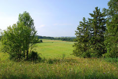Campo di estate con gli alberi Immagini Stock Libere da Diritti