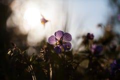 Campo di estate dei fiori immagine stock
