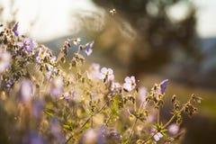 Campo di estate dei fiori fotografia stock libera da diritti