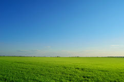 Campo di estate sotto il chiaro cielo Immagini Stock