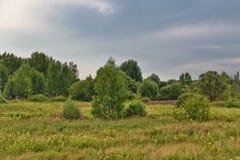 Campo di estate sotto il cielo triste Fotografia Stock