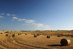Campo di fieno, valle di Barossa Fotografia Stock