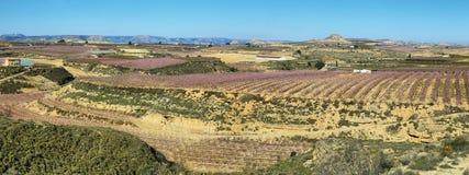 Campo di fioritura dei peschi a Lleida fotografie stock libere da diritti